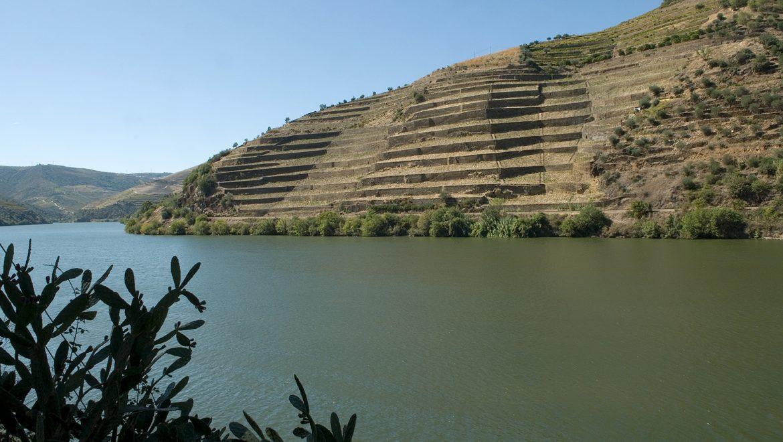 6 Chás do Douro que vão Conquistar o Mundo