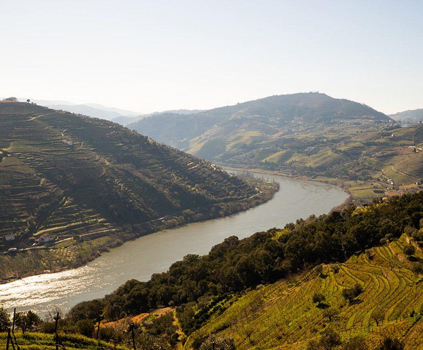 Época das Vindimas chegou: aproveite e prove os Chás do Douro