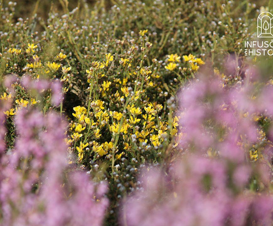 Um mundo de Plantas Aromáticas BIO | Infusões com História