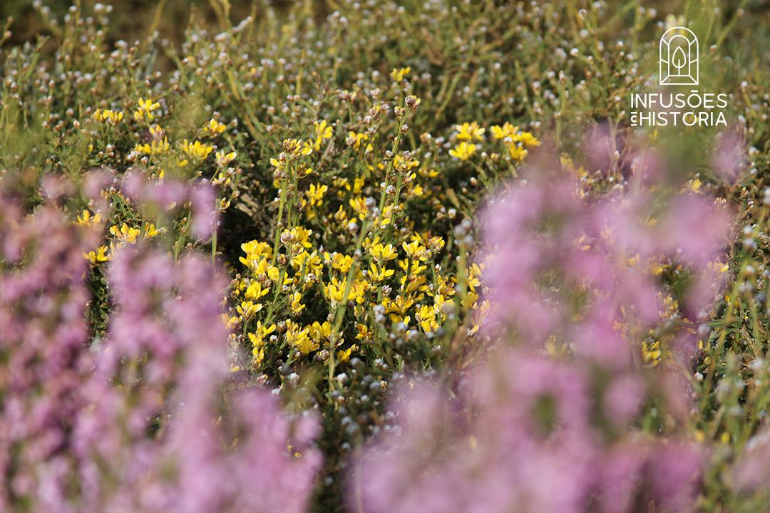 Um mundo de Plantas Aromáticas BIO   Infusões com História