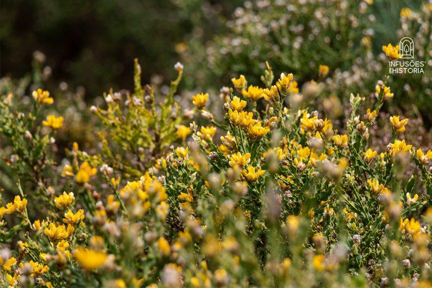 Alecrim, Hortelã e Carqueja – 3 Poderosas Plantas BIO